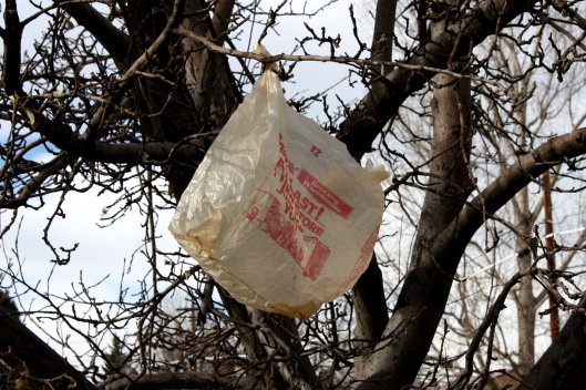 plastic-bag-in-tree