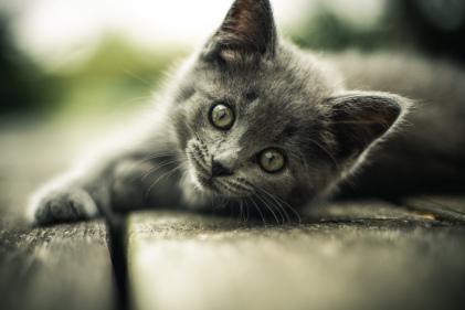 20170216-kitten-blog-ecobags